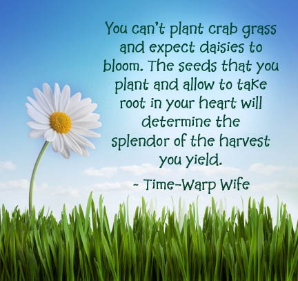 plant_daisies