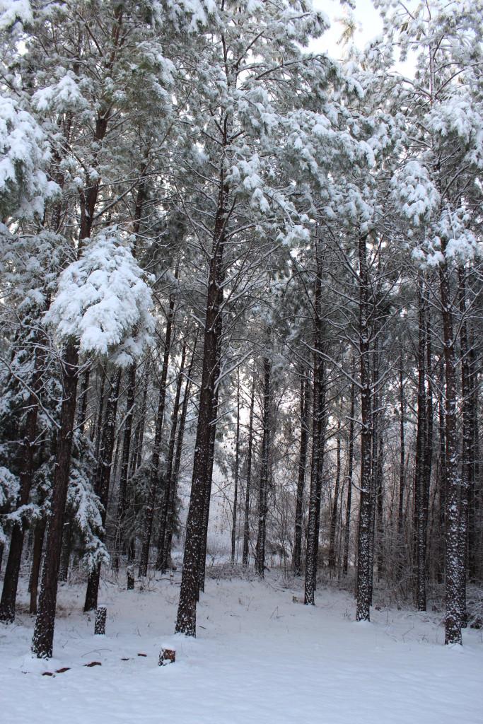 snow_trees_022615