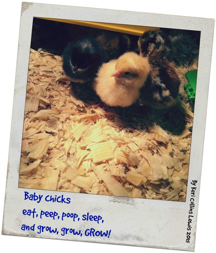 chicks_poem