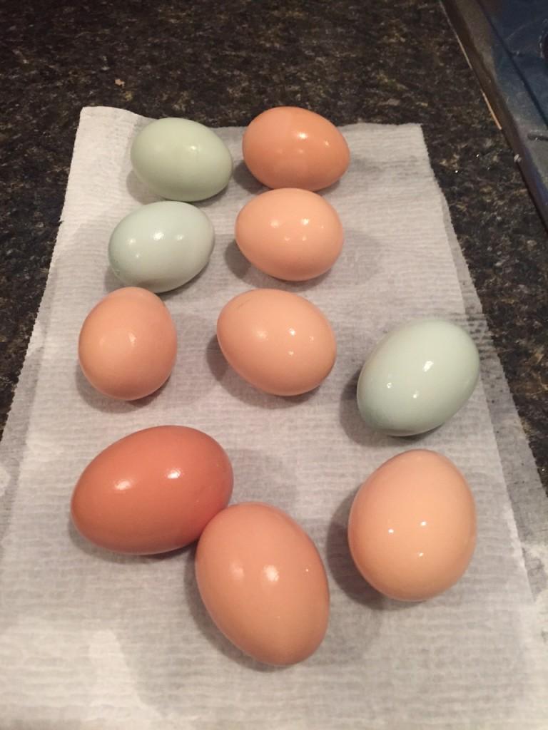 eggs_july_2015
