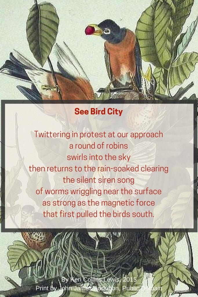 bird_city